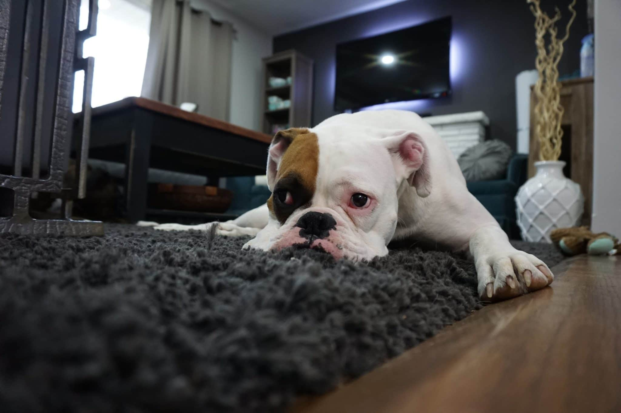 3 ways to ease your dog's anxiety