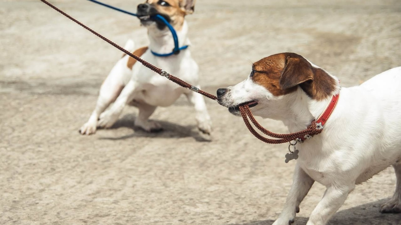 5 dog walking tips you'll wish you always knew